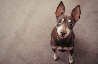 Doggie Debt