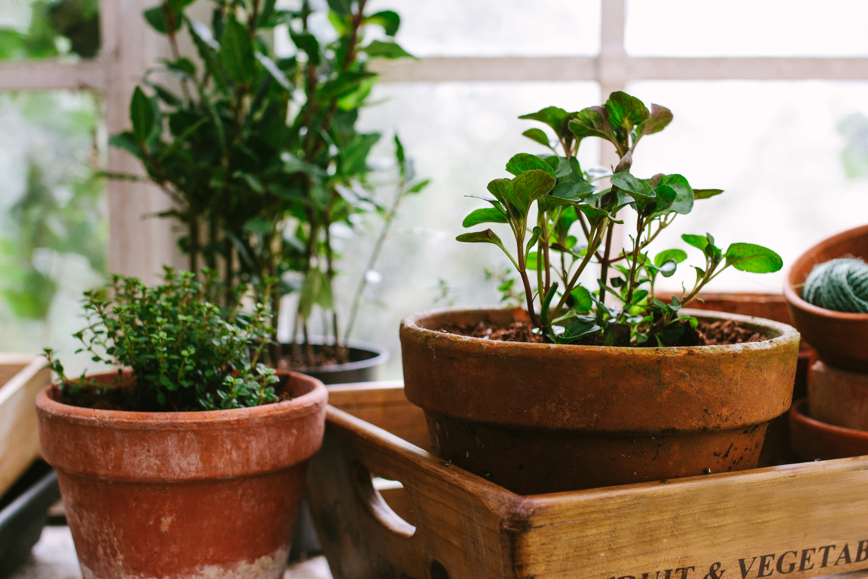 budgeting for happiness herbs